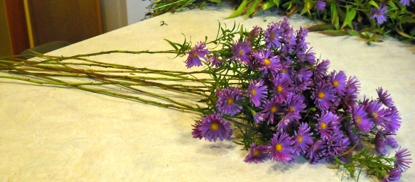 purple asters with bare stems