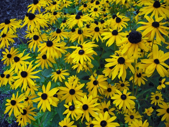 black-eyed susans make a pretty addition to a flower arrangement