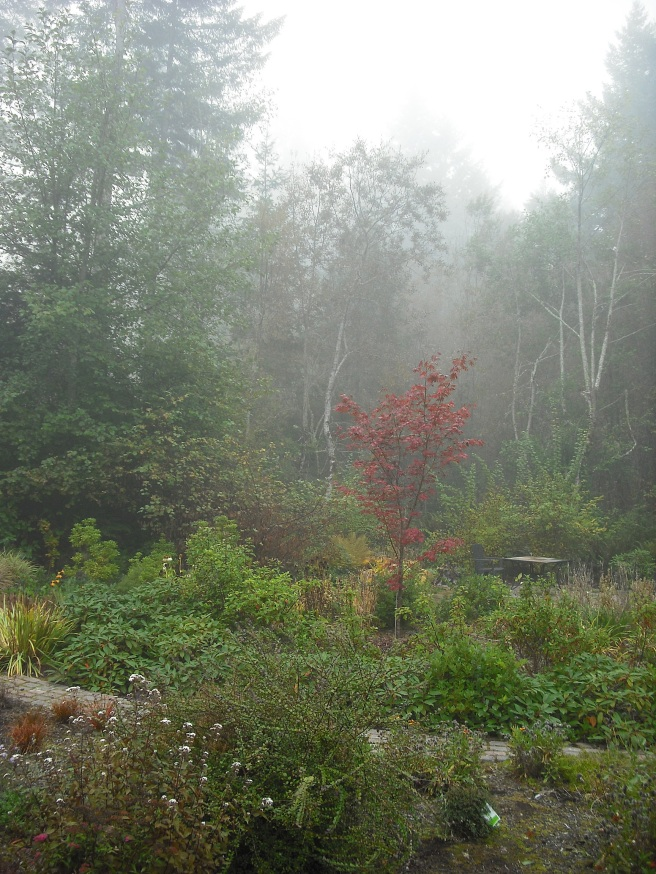 foggy view from my back deck
