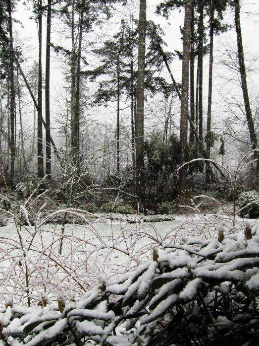 Snow in Olympia, WA