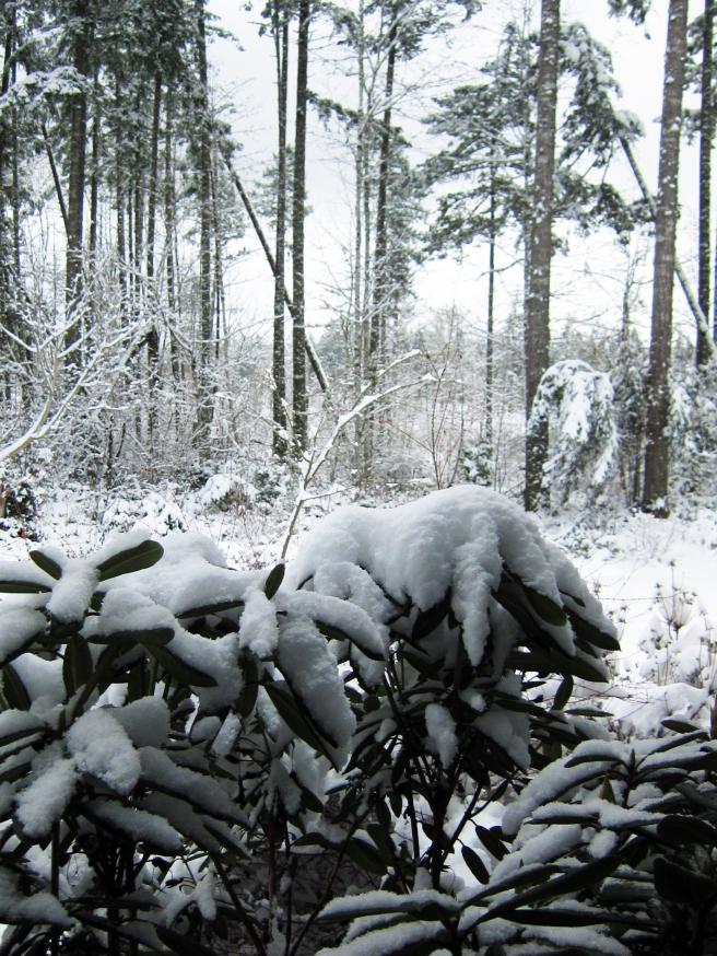 fesh fallen snow