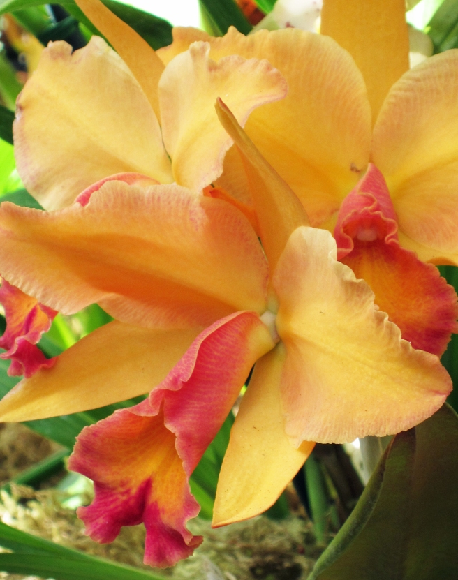 blooming orchids in Balboa Park, San Diego