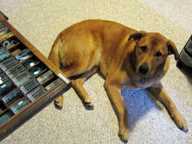 My dog, Chochi laying next to the Hamilton printers cabinet.