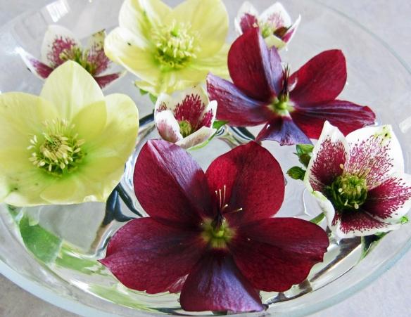 Helleborus floral arrangement