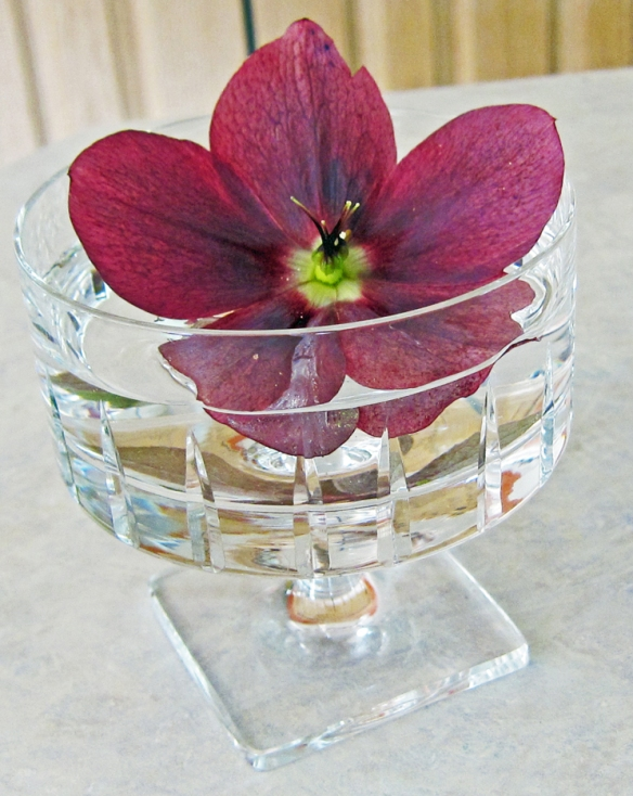 Helleborus in a crystal goblet