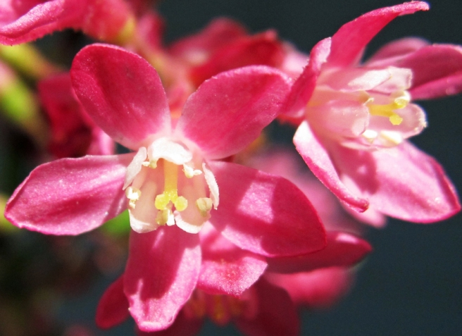 Pink flowers, close up photo