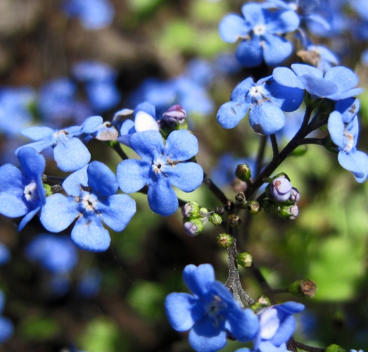 Spring blooms in the garden