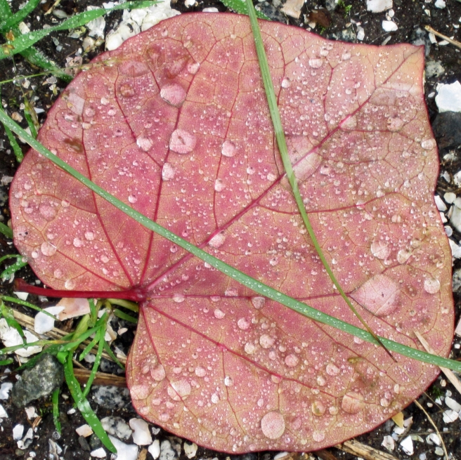 macro photo of a leaf with raindrops