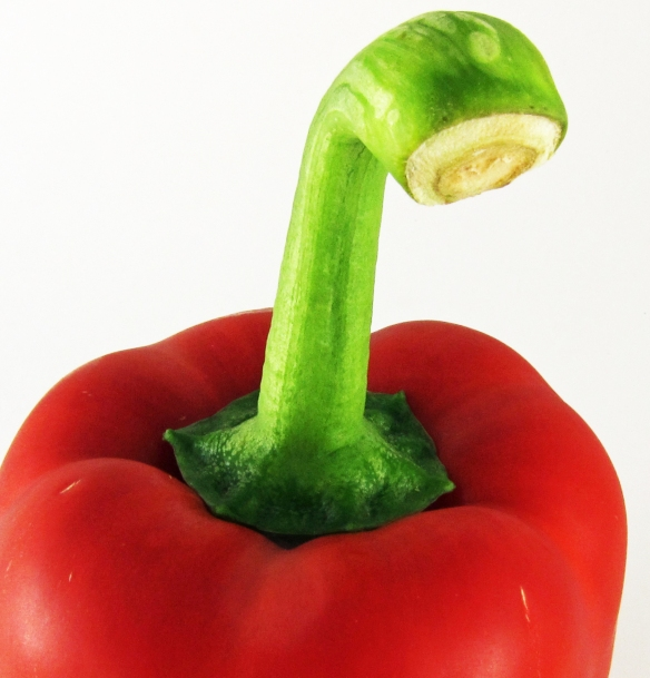 long green curving stem atop a red pepper