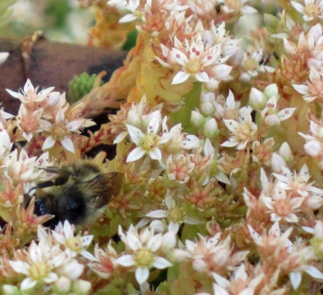 bee in garden flowers