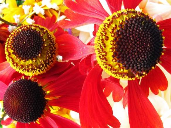 three brown flower centers with yellow rings of pollen