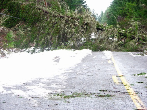 downed tree in the road