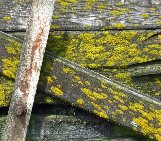 moss growing on the boards of an abandoned warehouse