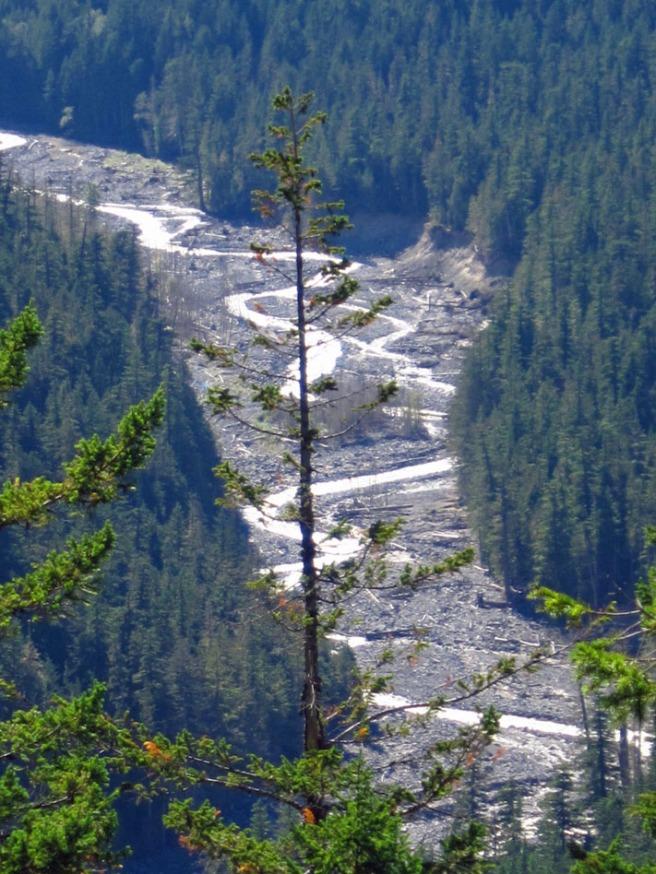 twisting river in Mt. Rainier National Park.