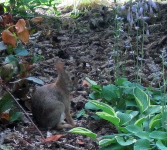 Bunny 13 clear