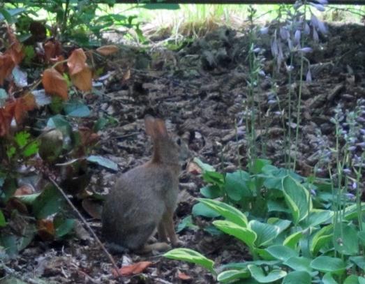 Bunny near the fence
