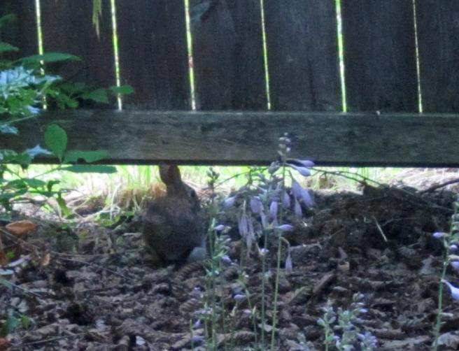 Bunny escape