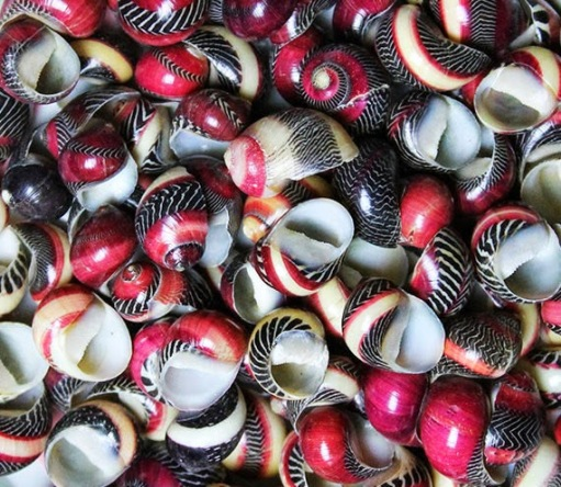 red, black and white snail shells.  Earring inspiration.