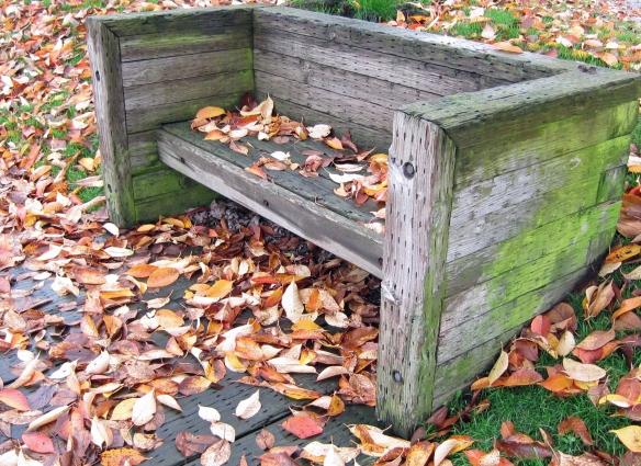 leaf strewn park bench