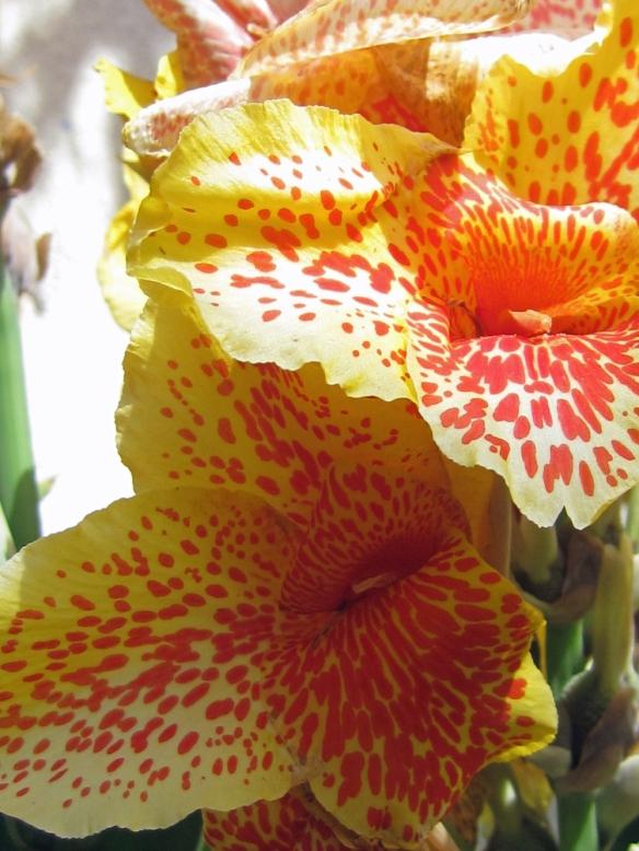 Patio, Yard & Plantings 10