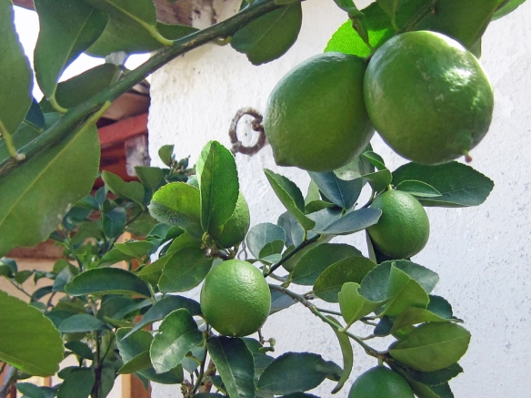 Patio, Yard & Plantings 13